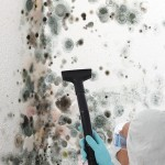 Black-Mold-Remediation-Martinez