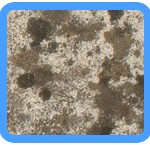 Water-Mold-Removal-Martinez